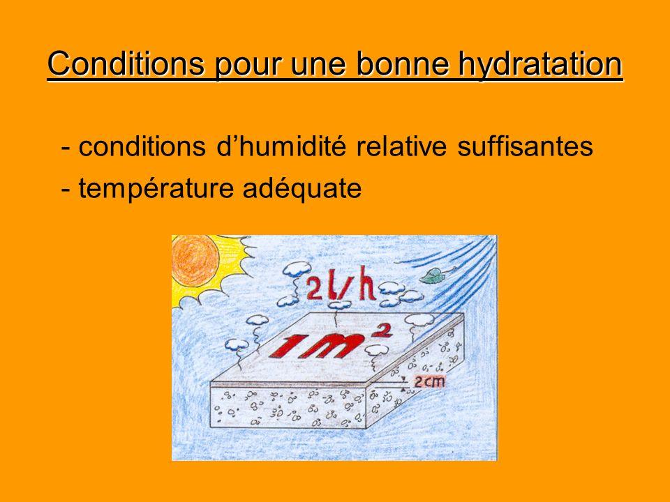 Conditions pour une bonne hydratation