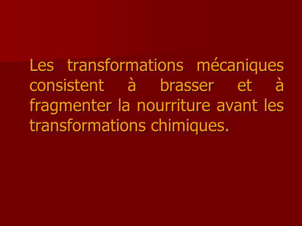 Les transformations mécaniques consistent à brasser et à fragmenter la nourriture avant les transformations chimiques.