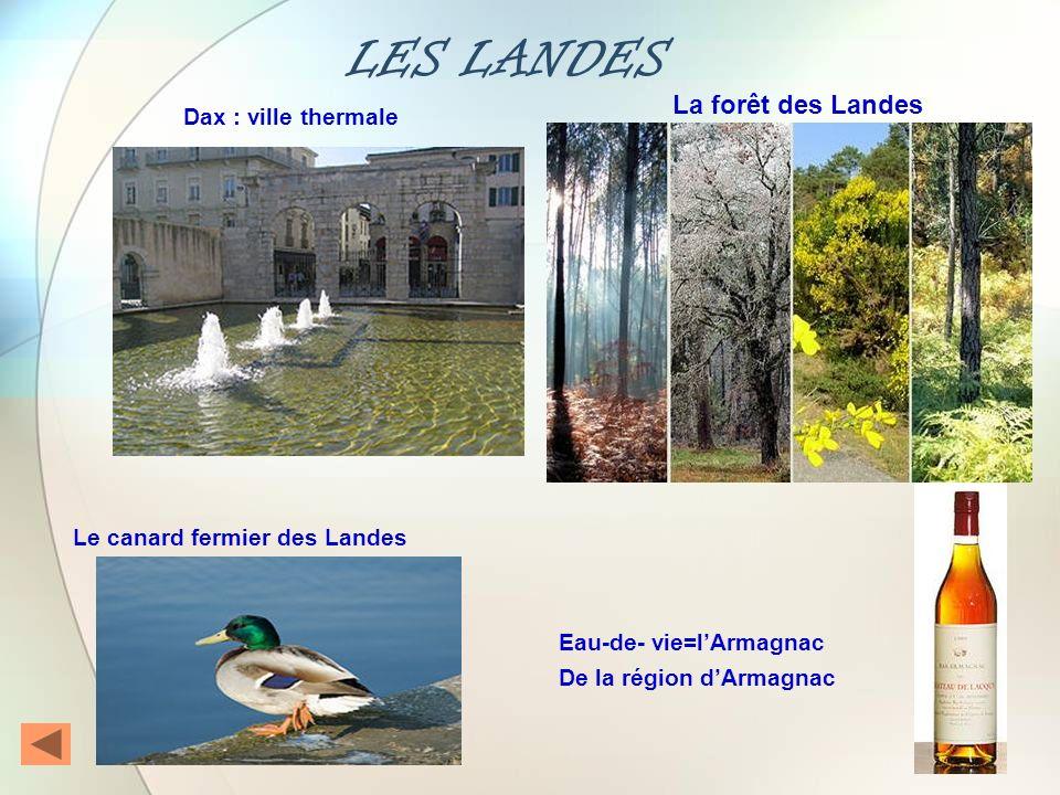 LES LANDES La forêt des Landes Dax : ville thermale