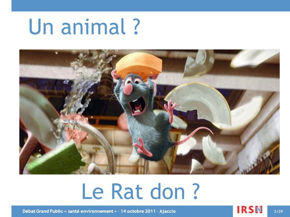Un animal Le Rat don Débat Grand Public « santé environnement » – 14 octobre 2011 – Ajaccio