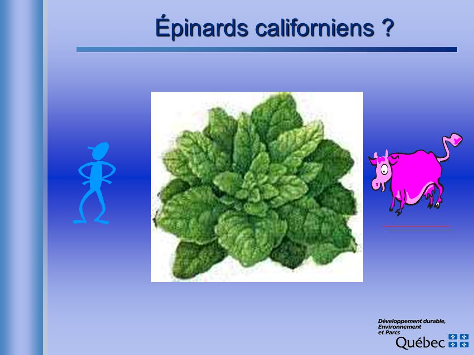 Épinards californiens