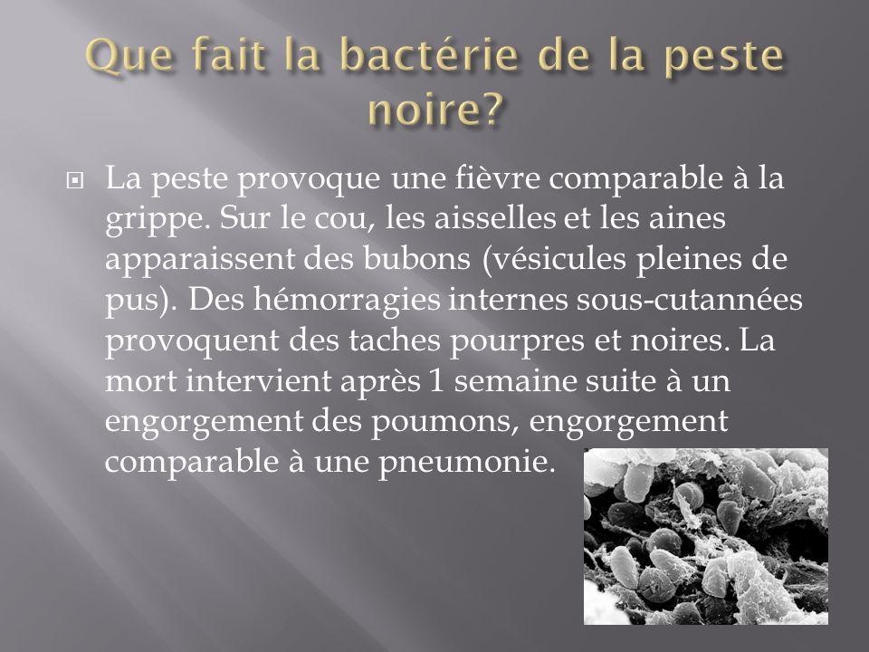 Que fait la bactérie de la peste noire