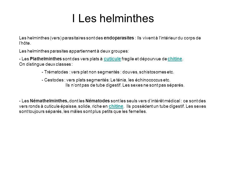 I Les helminthes Les helminthes (vers) parasitaires sont des endoparasites : Ils vivent à l intérieur du corps de l'hôte.