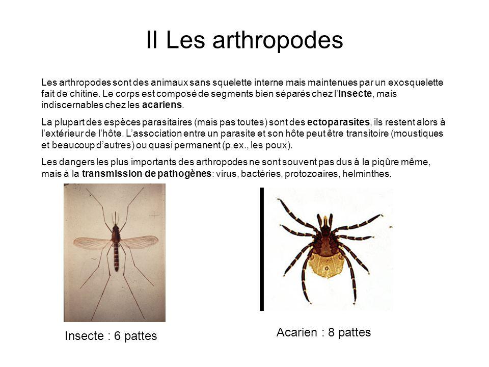 II Les arthropodes Acarien : 8 pattes Insecte : 6 pattes