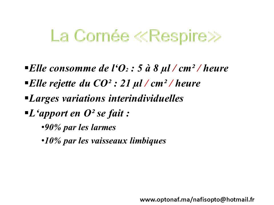 La Cornée ≪Respire≫ Elle consomme de l'O2 : 5 à 8 µl / cm² / heure