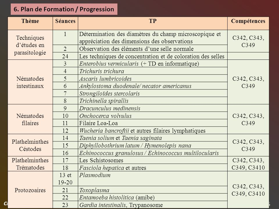 6. Plan de Formation / Progression
