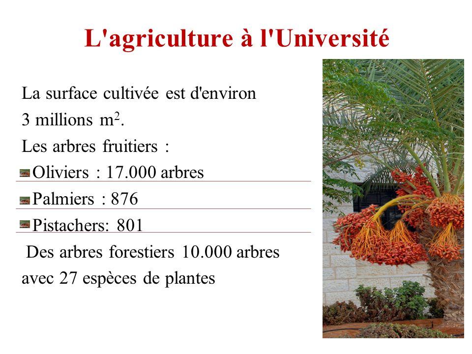 L agriculture à l Université