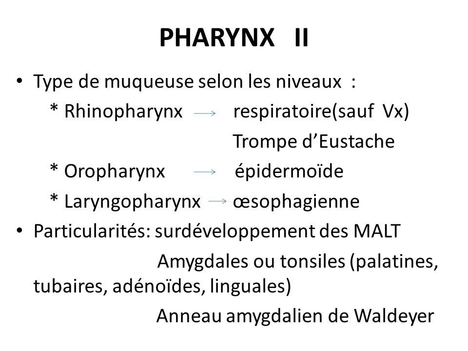 PHARYNX II Type de muqueuse selon les niveaux :