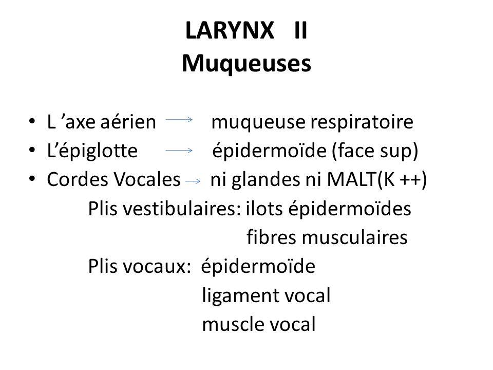 LARYNX II Muqueuses L 'axe aérien muqueuse respiratoire