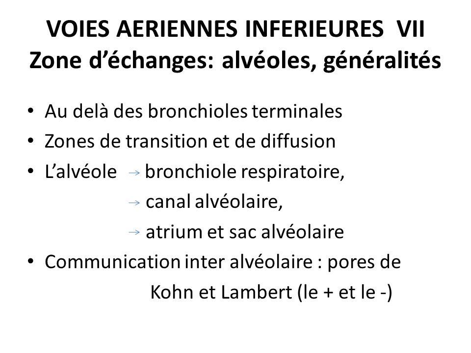 VOIES AERIENNES INFERIEURES VII Zone d'échanges: alvéoles, généralités