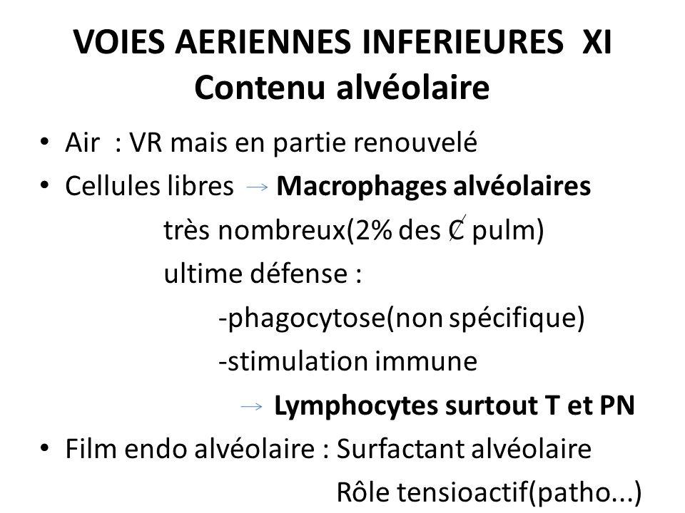 VOIES AERIENNES INFERIEURES XI Contenu alvéolaire