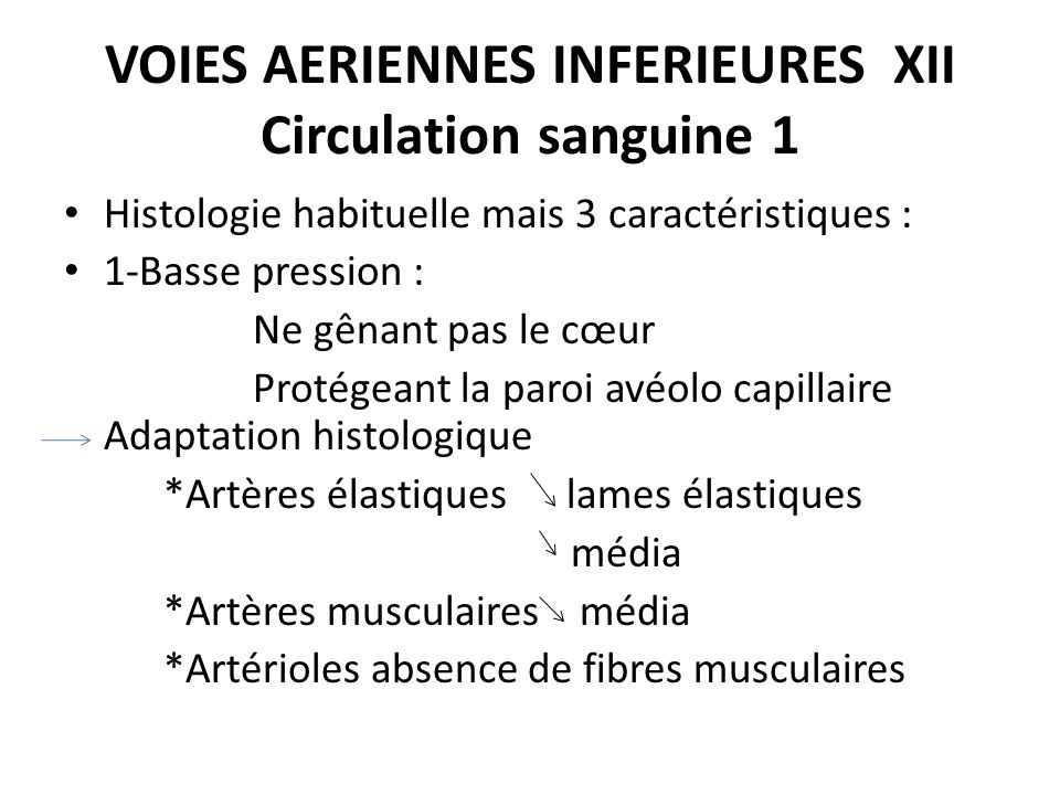 VOIES AERIENNES INFERIEURES XII Circulation sanguine 1