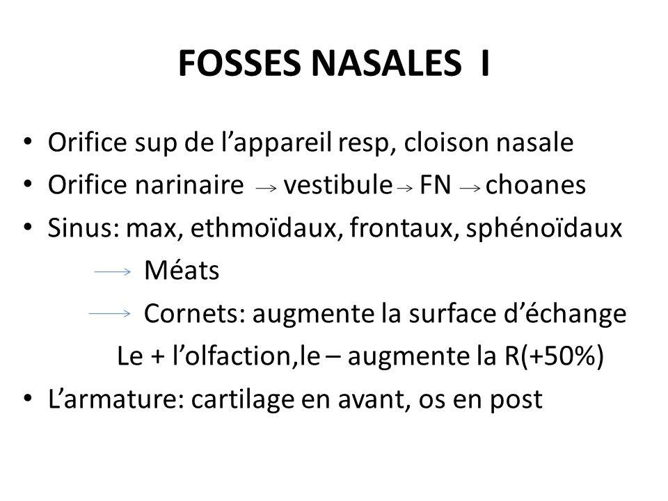 FOSSES NASALES I Orifice sup de l'appareil resp, cloison nasale