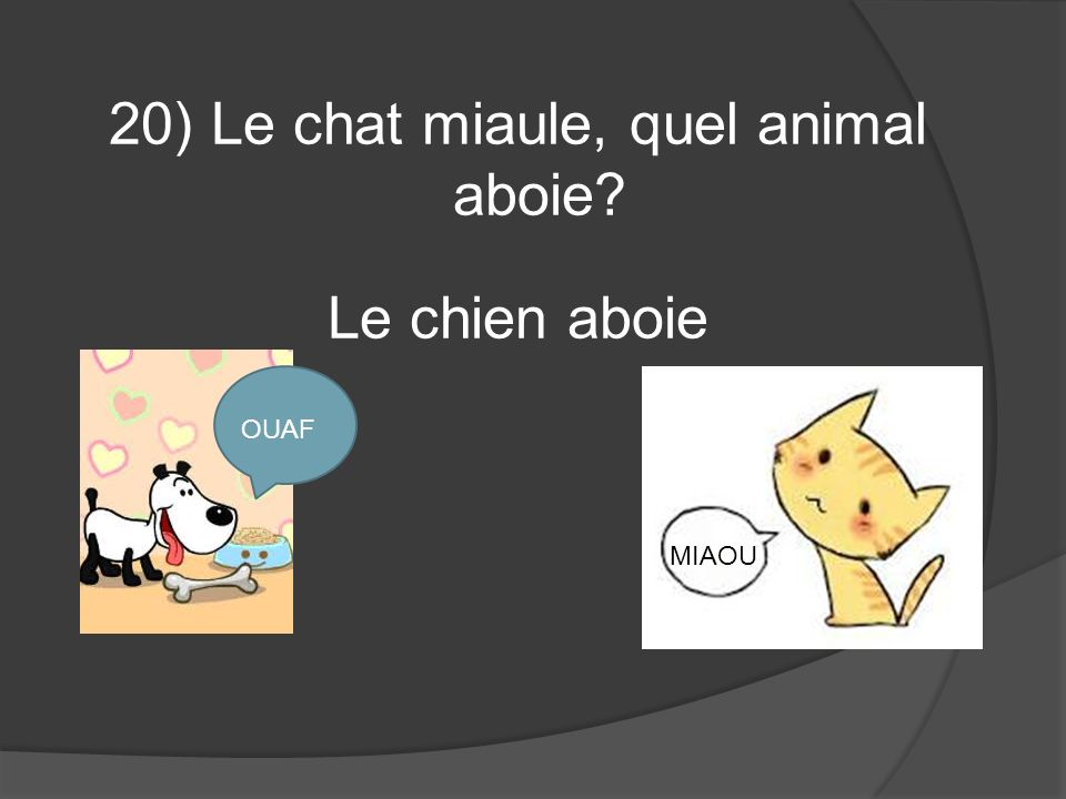 20) Le chat miaule, quel animal aboie Le chien aboie