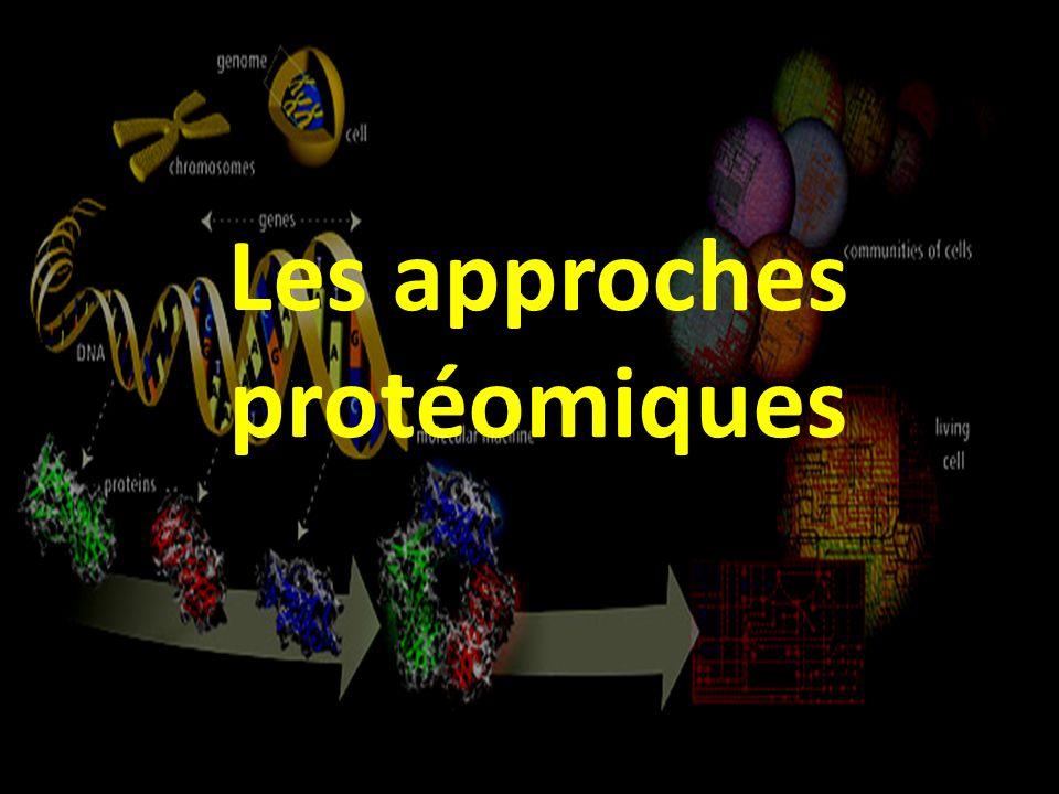 Les approches protéomiques