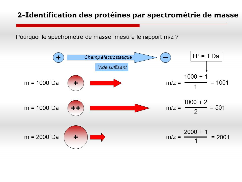 + + ++ + 2-Identification des protéines par spectrométrie de masse
