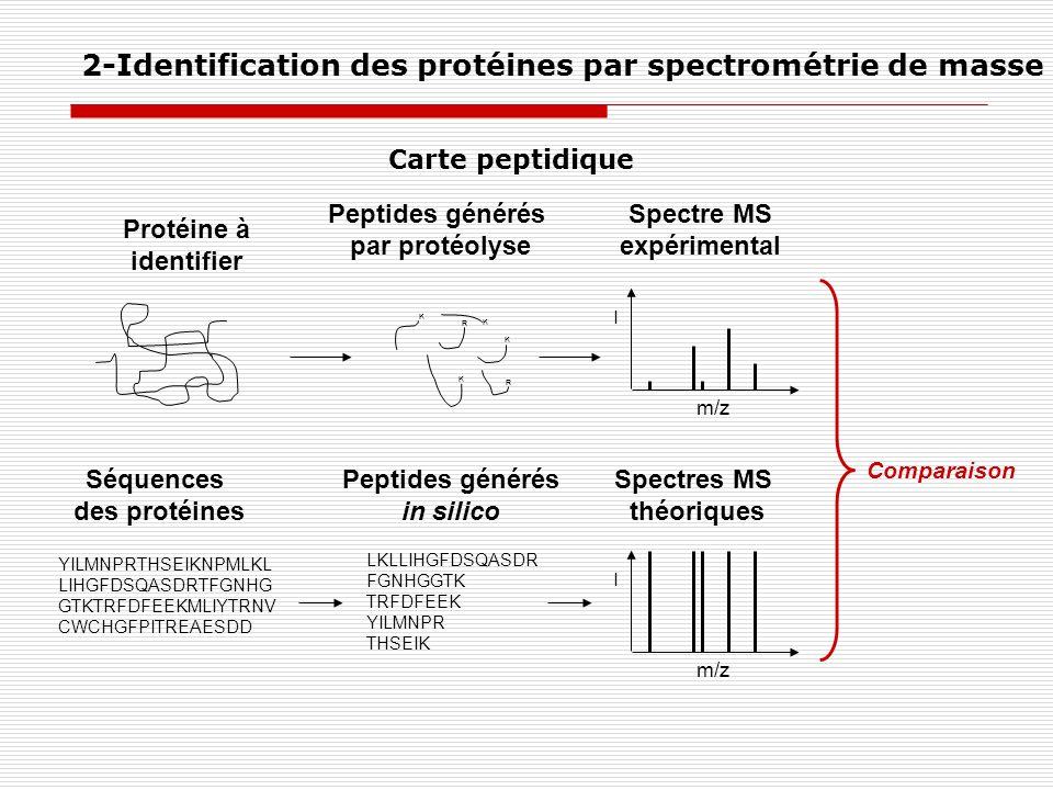 Spectre MS expérimental Peptides générés in silico