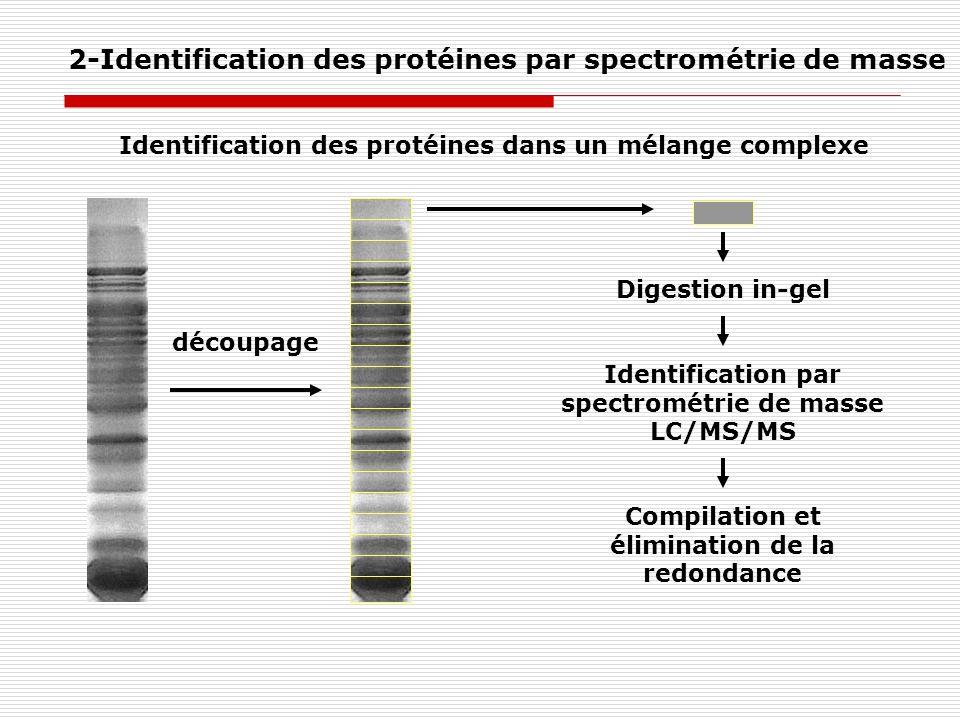 2-Identification des protéines par spectrométrie de masse