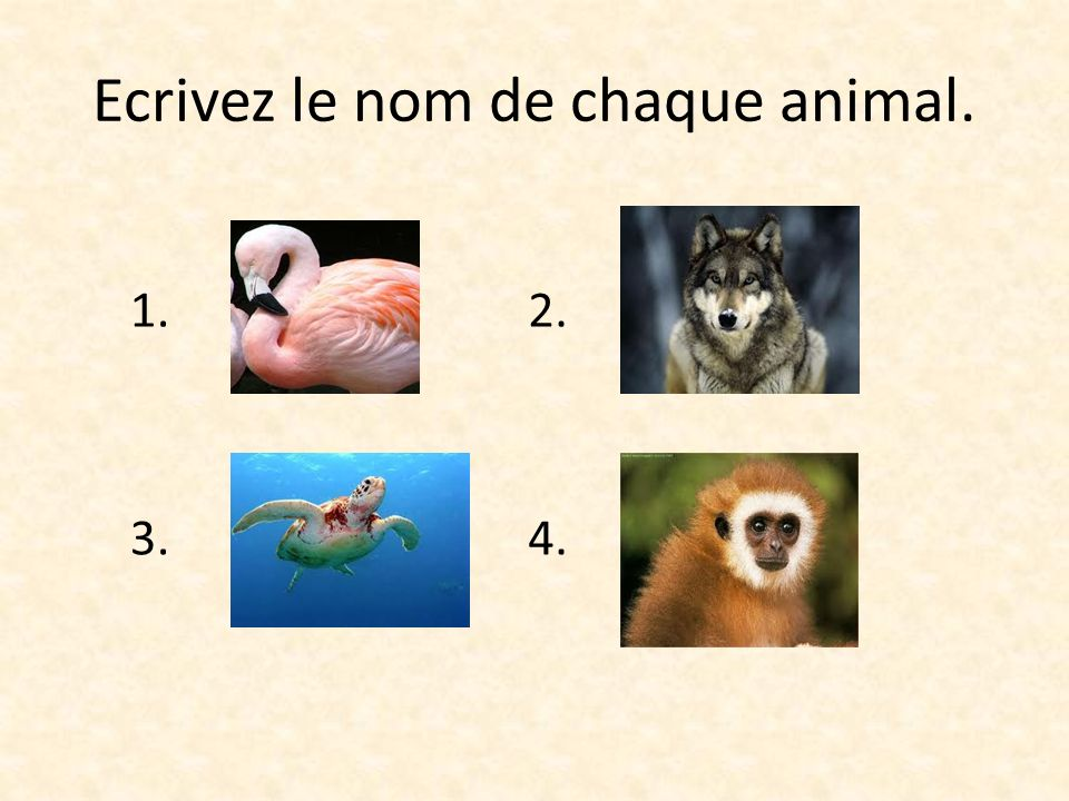 Ecrivez le nom de chaque animal.