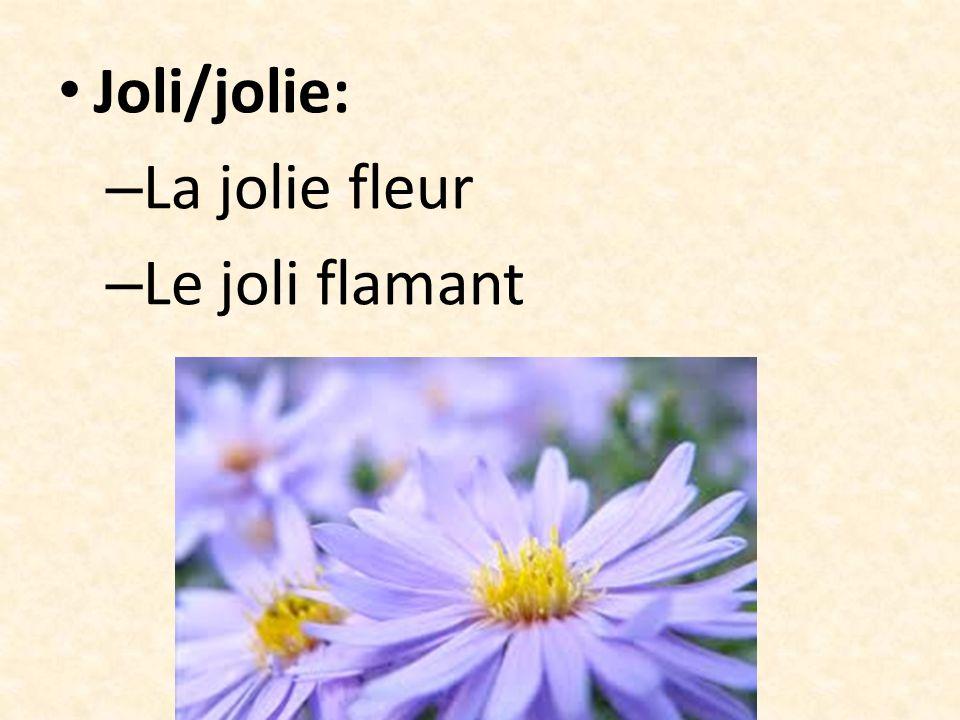 Joli/jolie: La jolie fleur Le joli flamant