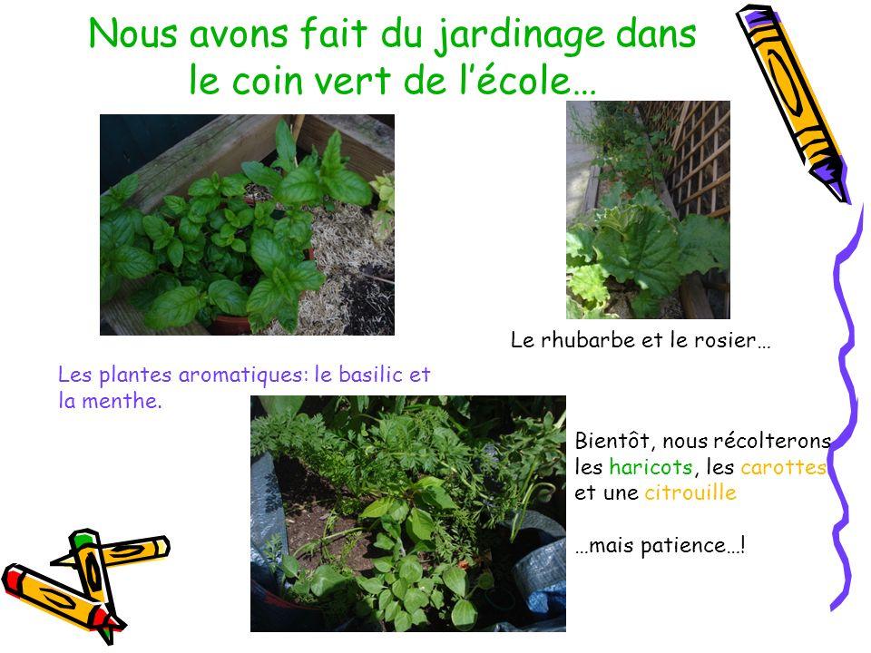 Nous avons fait du jardinage dans le coin vert de l'école…
