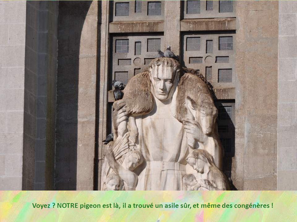 Voyez NOTRE pigeon est là, il a trouvé un asile sûr, et même des congénères !