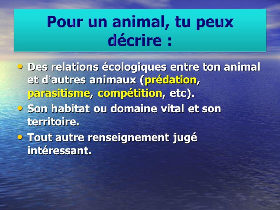 Pour un animal, tu peux décrire :