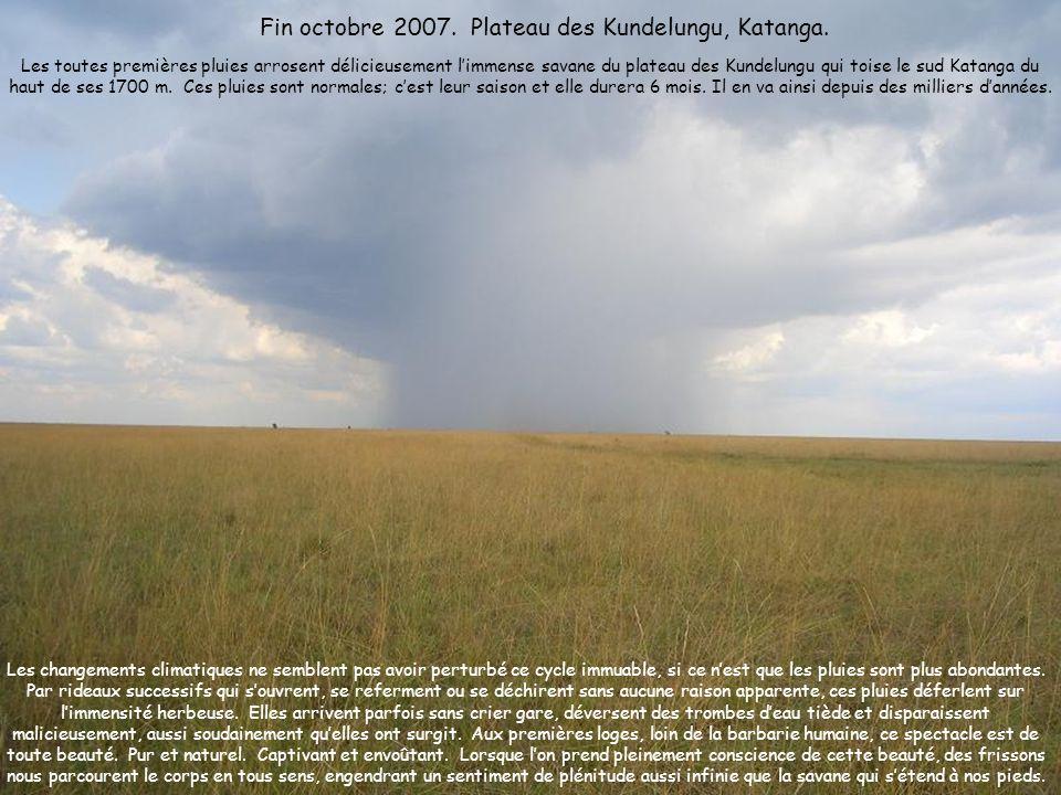 Fin octobre 2007. Plateau des Kundelungu, Katanga.