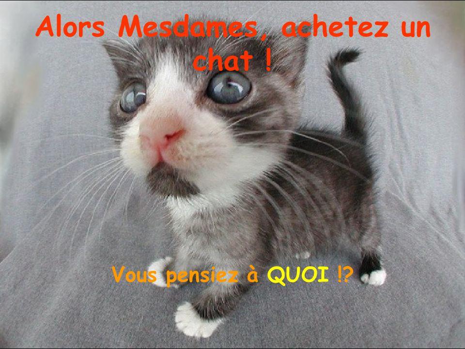 Alors Mesdames, achetez un chat !