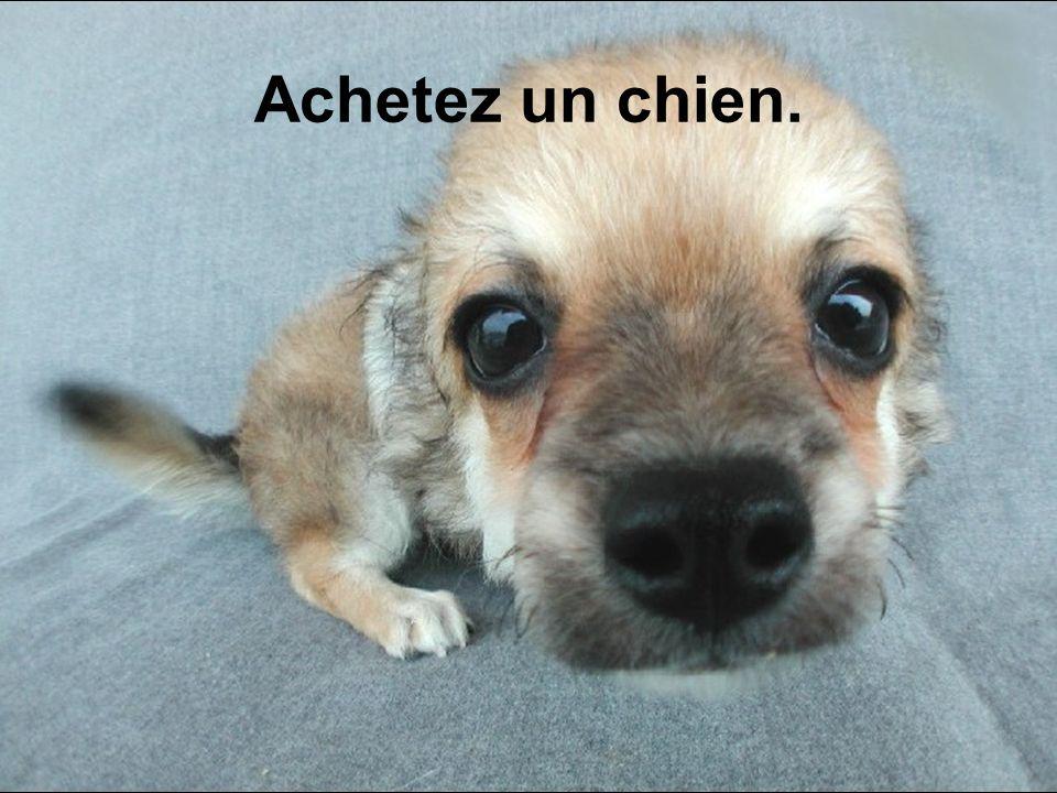 Achetez un chien. Diaporama PPS réalisé pour http://www.diaporamas-a-la-con.com