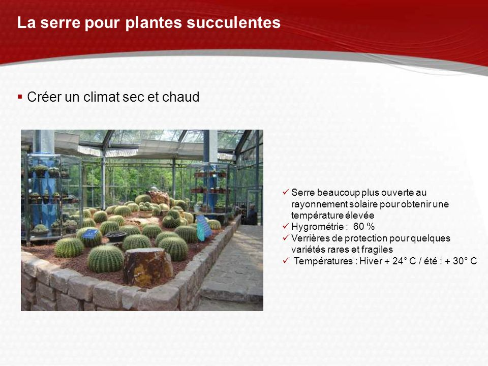 La serre pour plantes succulentes