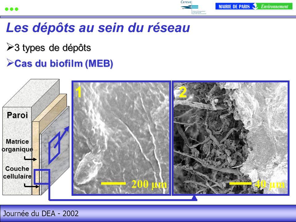 1 2 Les dépôts au sein du réseau 40 µm 200 µm 3 types de dépôts