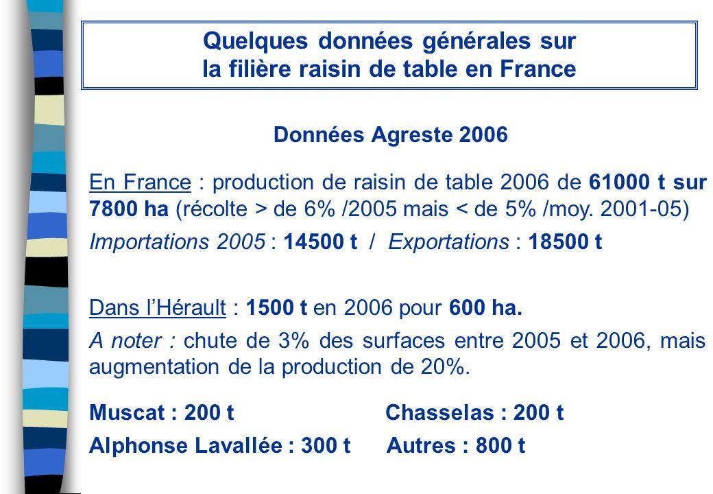 Quelques données générales sur la filière raisin de table en France
