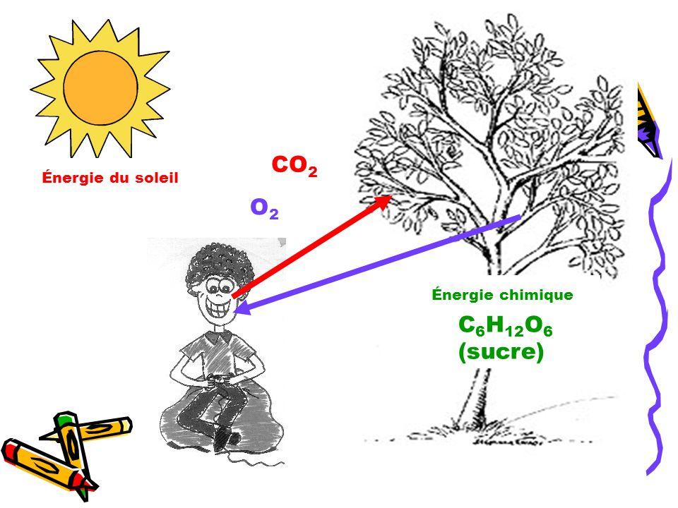 CO2 Énergie du soleil O2 Énergie chimique C6H12O6 (sucre)