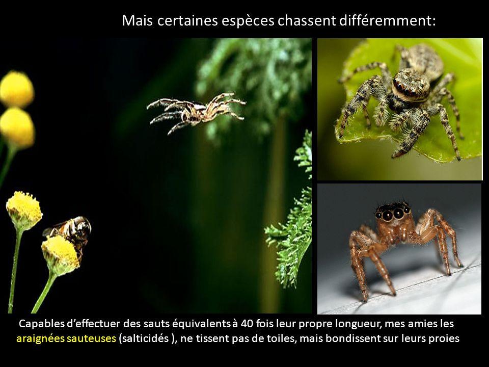 Mais certaines espèces chassent différemment: