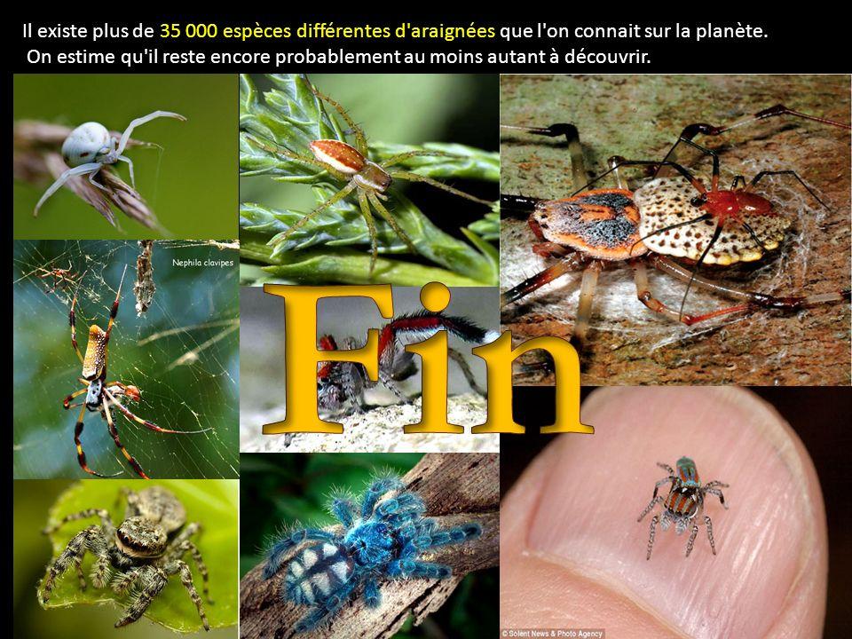 Il existe plus de 35 000 espèces différentes d araignées que l on connait sur la planète.