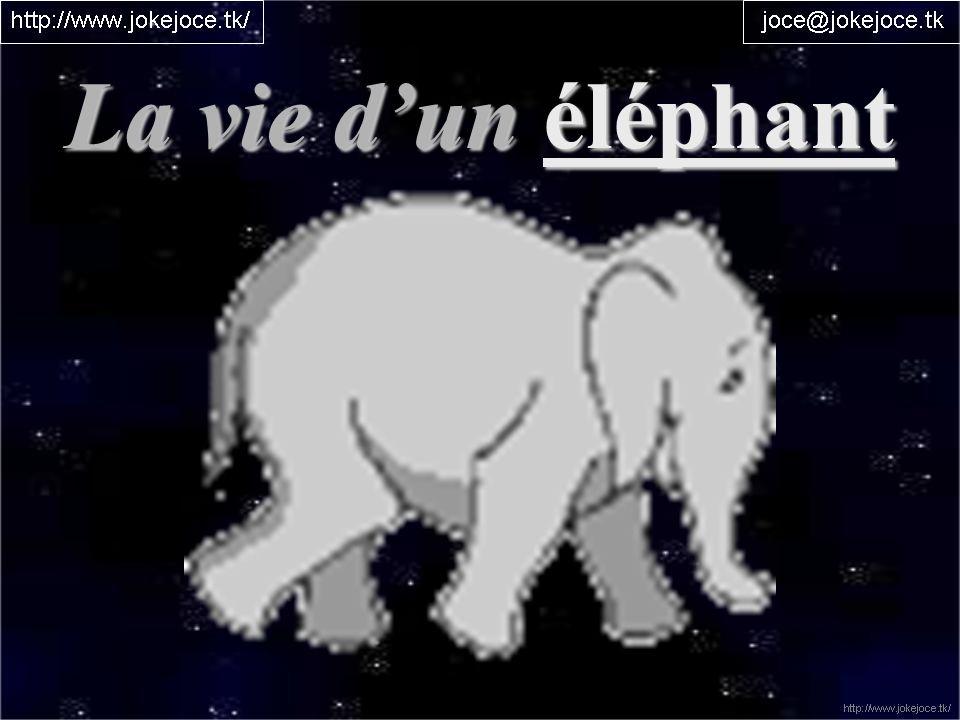 La vie d'un éléphant