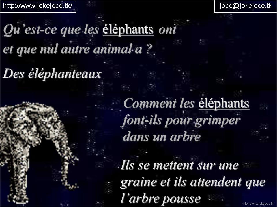 Qu'est-ce que les éléphants ont