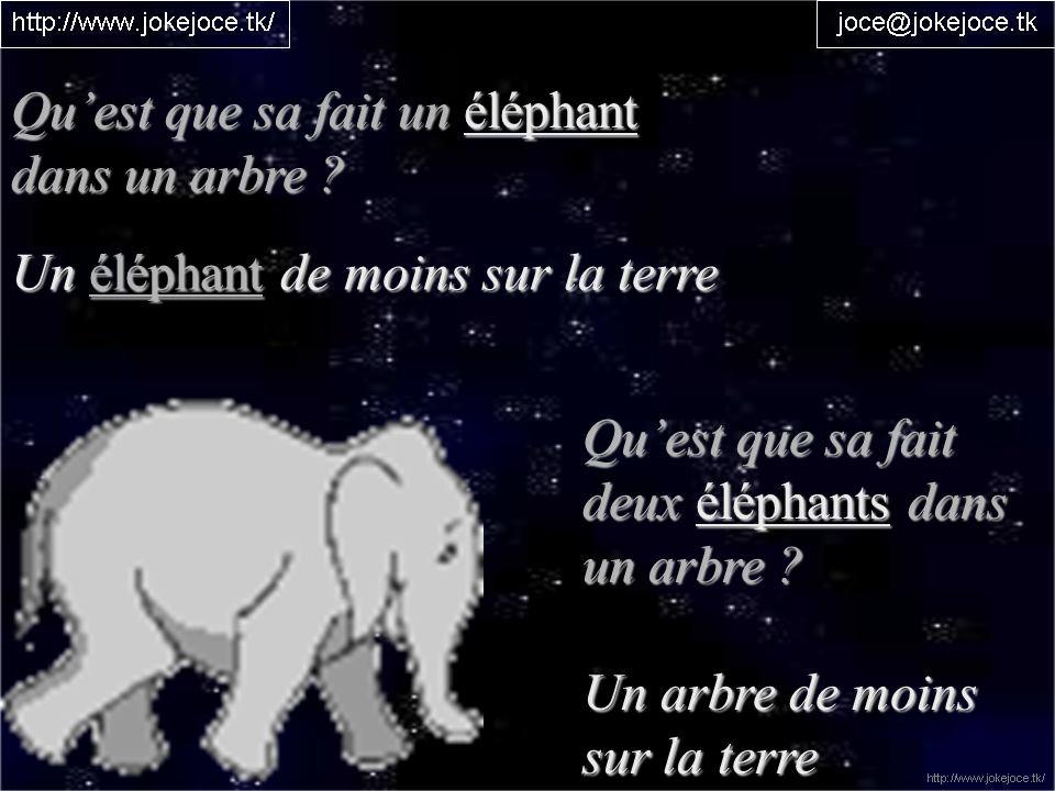 Qu'est que sa fait un éléphant