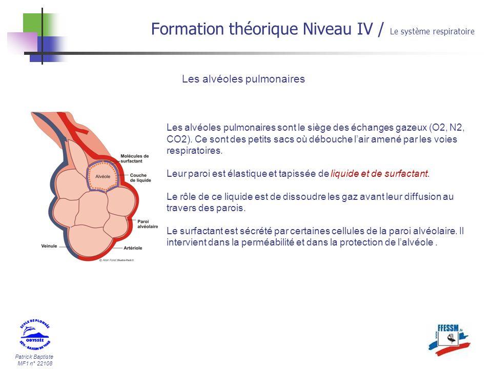 Les alvéoles pulmonaires