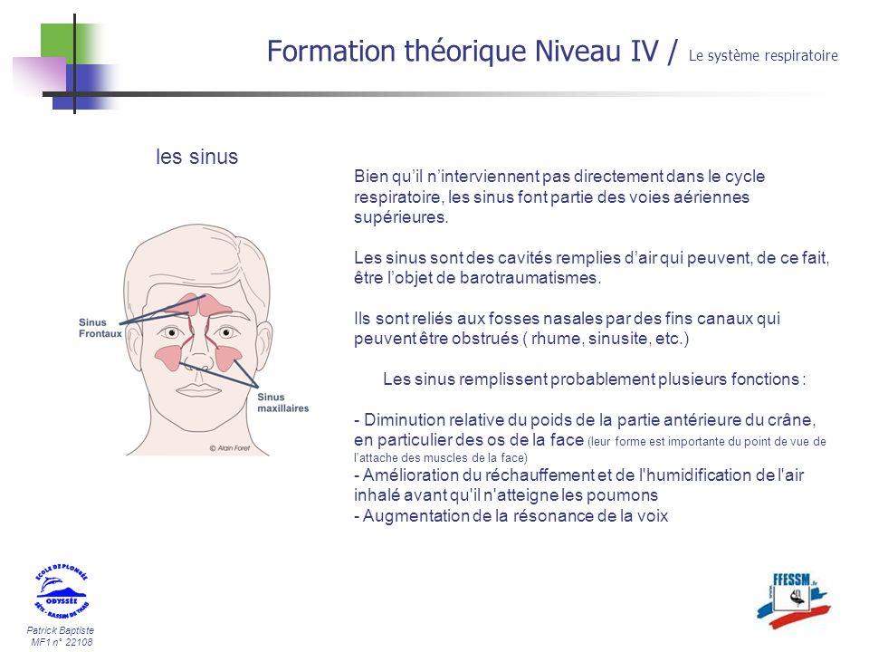 Les sinus remplissent probablement plusieurs fonctions :