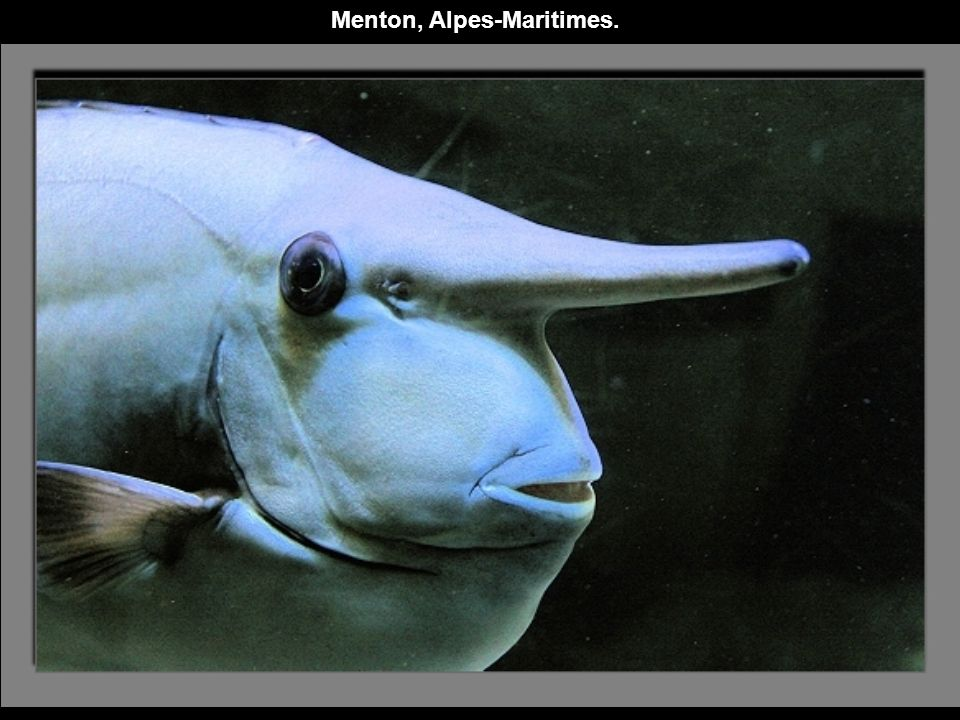 Menton, Alpes-Maritimes.