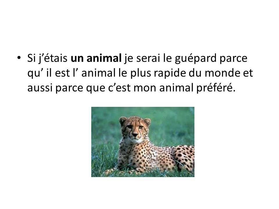 Si j'étais un animal je serai le guépard parce qu' il est l' animal le plus rapide du monde et aussi parce que c'est mon animal préféré.