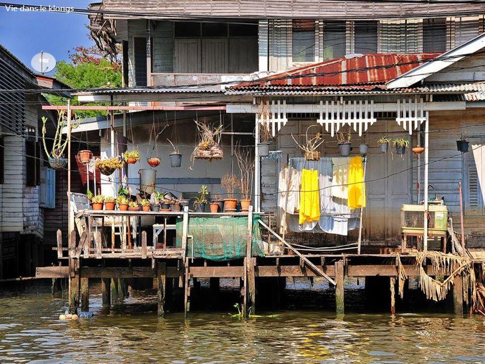 Vie dans le klongs