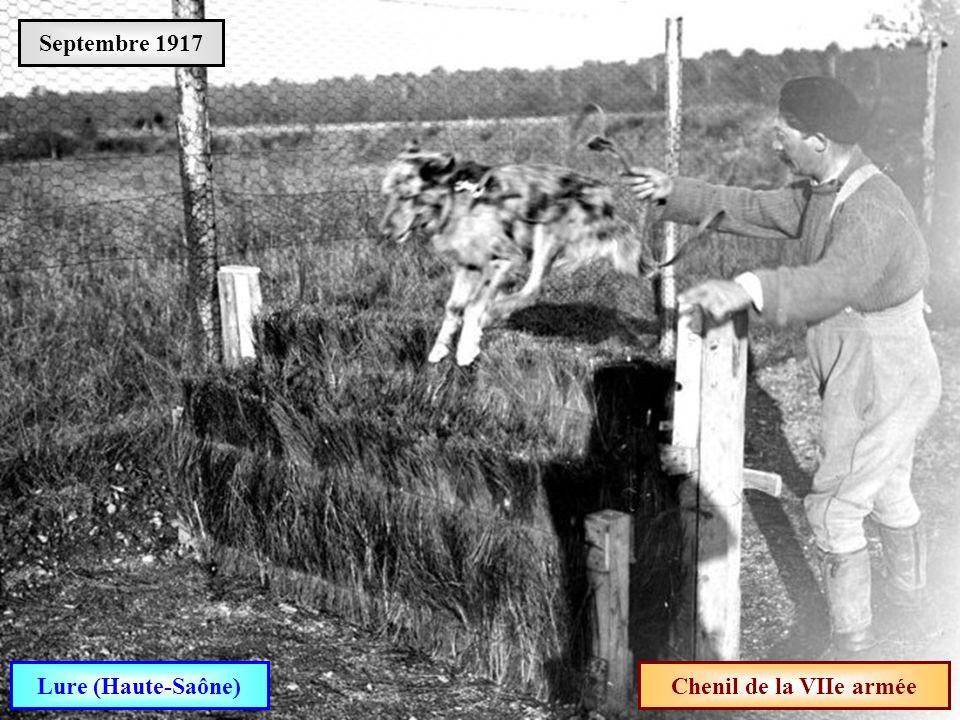Septembre 1917 Lure (Haute-Saône) Chenil de la VIIe armée