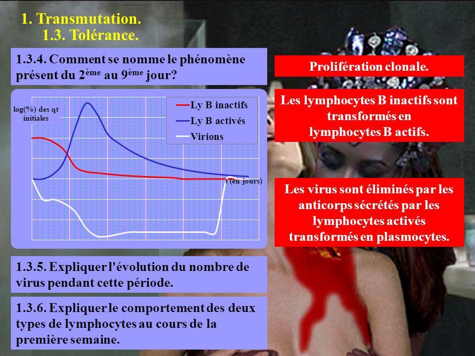 Prolifération clonale. Les lymphocytes B inactifs sont transformés en