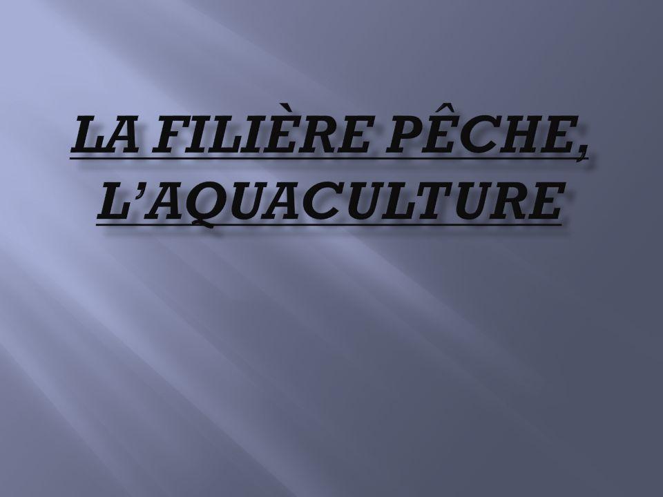 La filière pêche, l'aquaculture