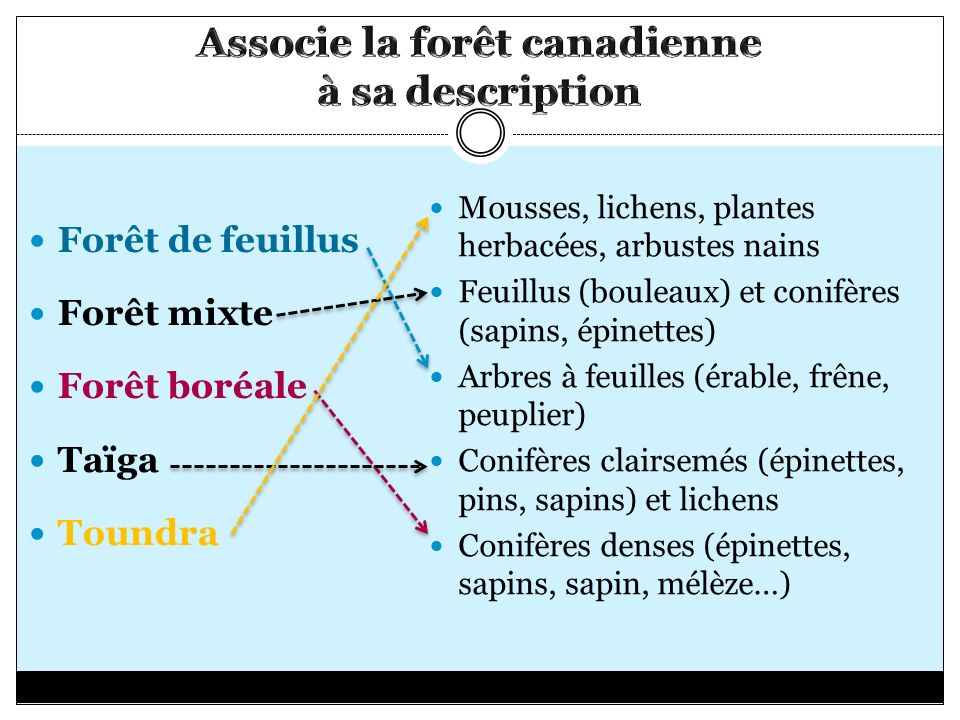 Associe la forêt canadienne à sa description