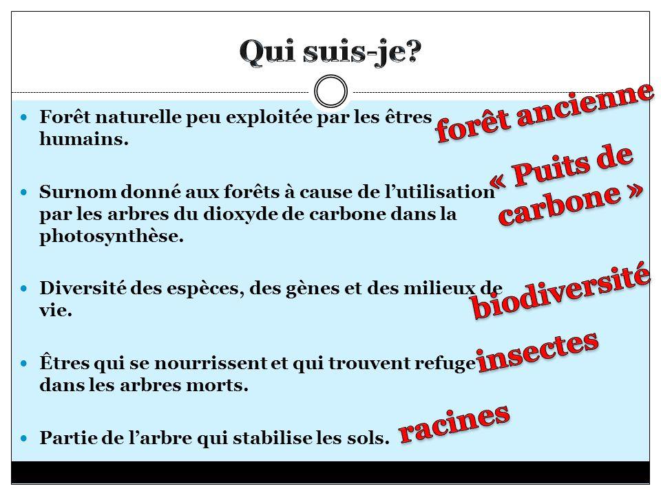 Qui suis-je forêt ancienne « Puits de carbone » biodiversité insectes