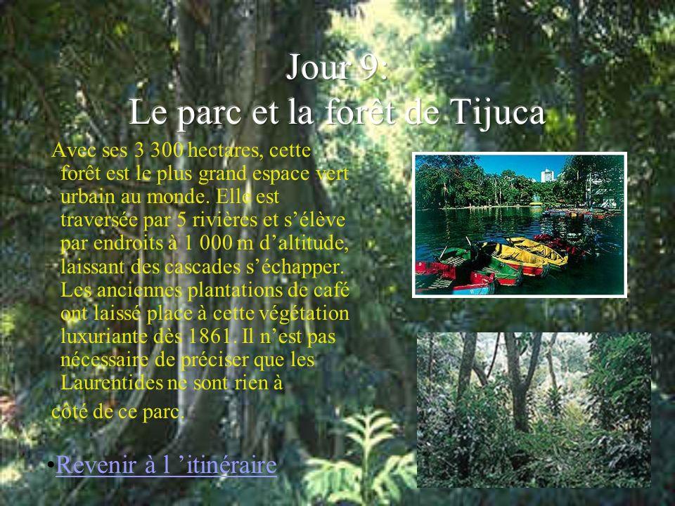 Jour 9: Le parc et la forêt de Tijuca